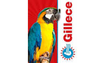 Gillece -Drain/Sewer Cleaning or 10 Outlet Replacement Service from Gillece for only $49.50 ($99 value)