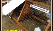 Rent the Chicken-Rent the Chicken Deluxe Package 50% off! All you need to have your own fresh eggs!