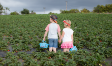 Kenny's Strawberry Farm-$4 for 2 Pounds of U-Pick Strawberries from Kenny's Strawberry Farm!($8 Value)