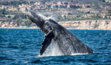 Davey's Locker-Up to 64% OFF Whale Watching Tours from Davey's Locker!