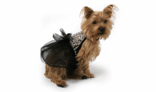 Muttropolis-$25 for $40 at Muttropolis - Modern Pet Supplies (Multiple Locations)