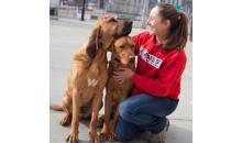 Sit Means Sit Dog Training-Half off 6 Week Puppy Package at Sit Means Sit Dog Training in South Hills!