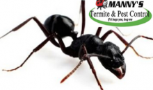 Manny's Termite & Pest Control-Get Rid of Your Pesky Intruders with Manny's Pest Control Treatments!