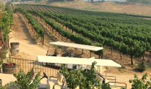 San Diego Ride & Tours, Inc.-Temecula Wine Country Tour - 35+ Wineries to Choose From