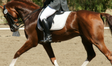 Stepping Stones Sport Horses-60% OFF Private Horseback Riding Lesson