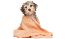 Happy Tailz Pet Spa-$20 for $10 to use at Happy Tailz Pet Spa! Use up to 5 per visit!