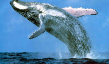 San Diego  Sailing Tours-Whale Watching Tour, Lunch & One Beer or Wine Per Guest